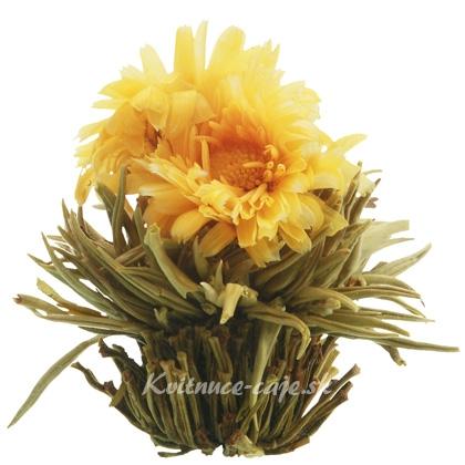 Kvitnúci čaj Slnovrat