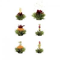 Zelené kvitnúce čaje 6ks