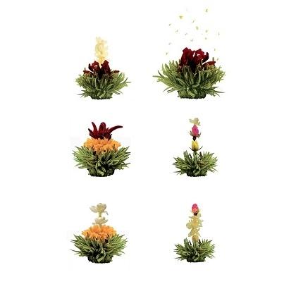 Zelené kvitnúce čaje 12ks